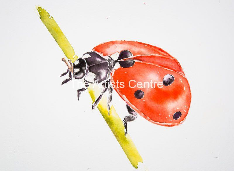 Ladybird watercolour by Lorna Markillie