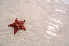 Starfish sand and sparkling waters of the Bahamas Abacos