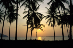 Sunset in palms in foreground Langkawi Malaysia