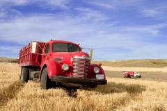 1940 s International KB-7 Harvester truck in a field in Montana USA